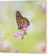 Monarch On Cosmos Wood Print