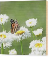 Monarch On Daisies Wood Print