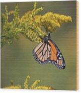 Monarch On Goldenrod Wood Print
