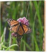 Monarch On Joe Pye Wood Print