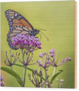 Monarch On Pink Flower Wood Print