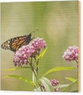 Monarch On Swamp Milkweed 2014-1 Wood Print