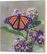 Monarch On The Milkweed Wood Print