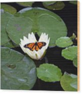 Monarch On Waterlily Wood Print
