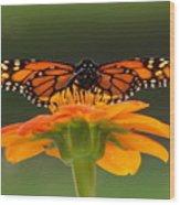 Monarch Orange Wood Print