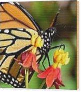 Monarch Pollination 1 Wood Print