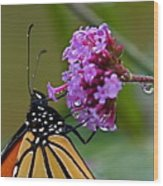 Monarch Purple Wood Print