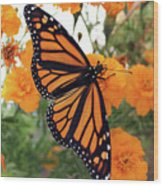 Monarch Series 1 Wood Print