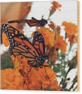Monarch Series 4 Wood Print