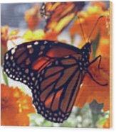 Monarch Series 7 Wood Print