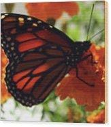 Monarch Series 8 Wood Print