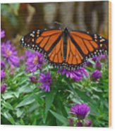 Monarch Spreading Its Wings Wood Print