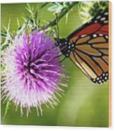 Monarch Thistle Wood Print