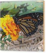 Monarch Wood Print by Trina Prenzi