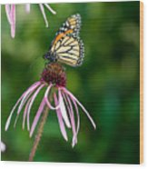Monarched Coneflower Wood Print