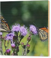 Monarchs And Blazing Star Wood Print