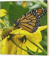 Monarchs Gold Wood Print
