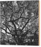 Monastery Tree Wood Print