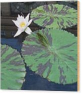 Monet Lilies White  Wood Print