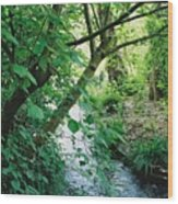 Monet's Garden Stream Wood Print
