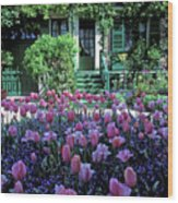Monet's House With Tulips Wood Print