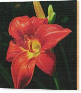 Monikas Red Lily Wood Print