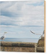 Monitored Seagull Take-off Wood Print