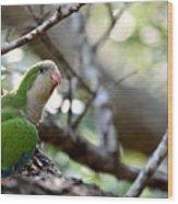 Monk Parrot Wood Print