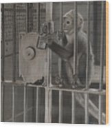 Monkey Business Wood Print