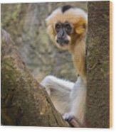 Monkey Chillin Wood Print