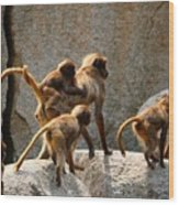 Monkey Family Wood Print