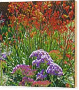 Yellow-orange Kangaroo Paws And Sea Lavender By Napier At Pilgrim Place In Claremont-california Wood Print