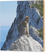Monkey In Gibraltar Wood Print