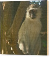 Monkey In The Tree Wood Print