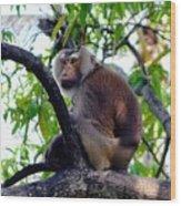 Monkey In Tree Wood Print