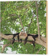Monkey Love Wood Print