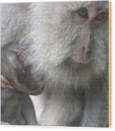 Monkey Mother 3 Wood Print
