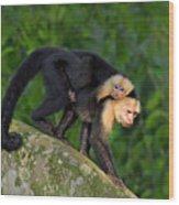 Monkey On My Back Wood Print