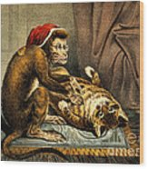 Monkey Physician Examining Cat For Fleas Wood Print