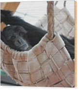 Monkey Play Wood Print