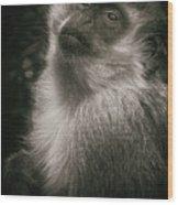 Monkey Portrait Wood Print