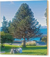 Monkey Puzzle Tree In Central Park In Bariloche-argentina  Wood Print