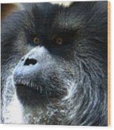 Monkey Stare Wood Print
