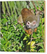 Monkey Time Wood Print