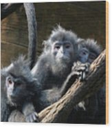 Monkey Trio Wood Print