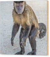 Monkey_0726 Wood Print