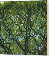Monkeypod Canopy Wood Print by Peter French - Printscapes