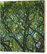 Monkeypod Canopy Wood Print