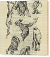 Monkeys Black And White Illustration Wood Print