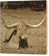 Monochrome Longhorn Cow Rsting In Grass Wood Print